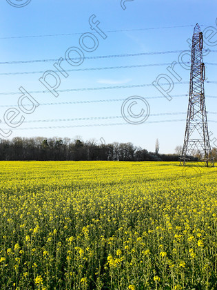 Pylon & yellow-005 