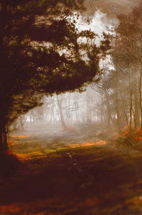 MistyC 