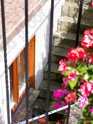 Surrey-009 