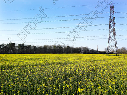 Pylon & yellow-004 