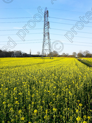 Pylon & yellow-003 